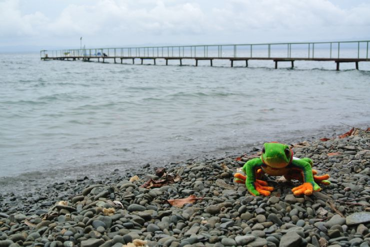 Javi the Frog at the beach pier at Playa Nicuesa Rainforest Lodge