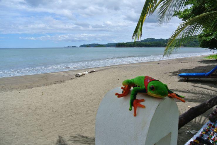 Javi the Frog at Bahia del Sol, Potrero beach, Guanacaste