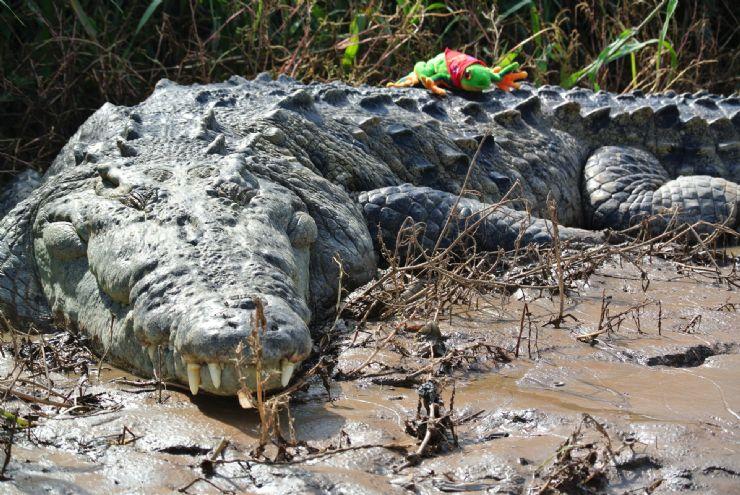 Javi over resting Croc, Tarcoles