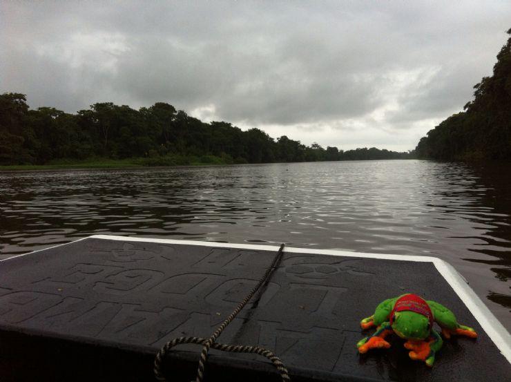 Javi the Frog sailing on Tortuguero