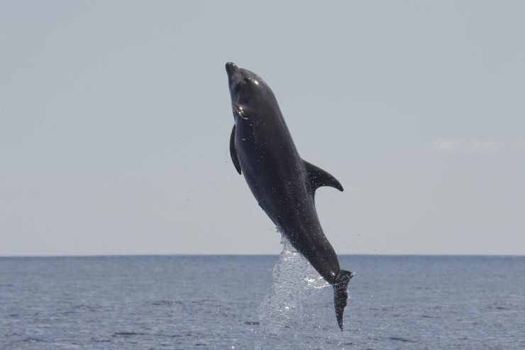 See Dolphins in the warm and tropical waters of Costa Rica