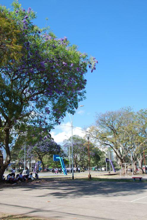 Kids enjoying La Sabana Park in San Jose