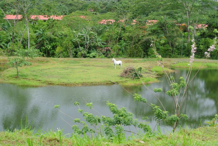 Beautiful Lake with white horse at Arenal Volcano Inn, La Fortuna