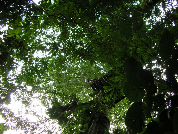 Looking up at a Platform on a Canopy Tour in Manuel Antonio
