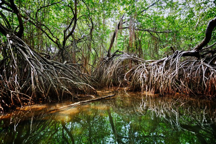 Amazing Sierpe Terraba Mangrove