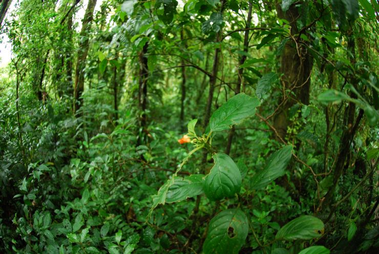 Middle of the forest in the Santa Elena Cloud Forest Reserve