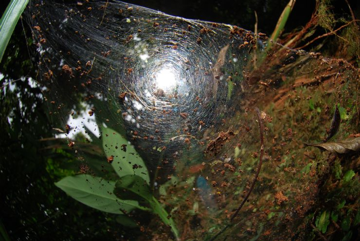 Spiders are plentiful in the rainforest