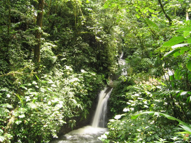 Waterfall at Monteverde Cloud Forest Reserve