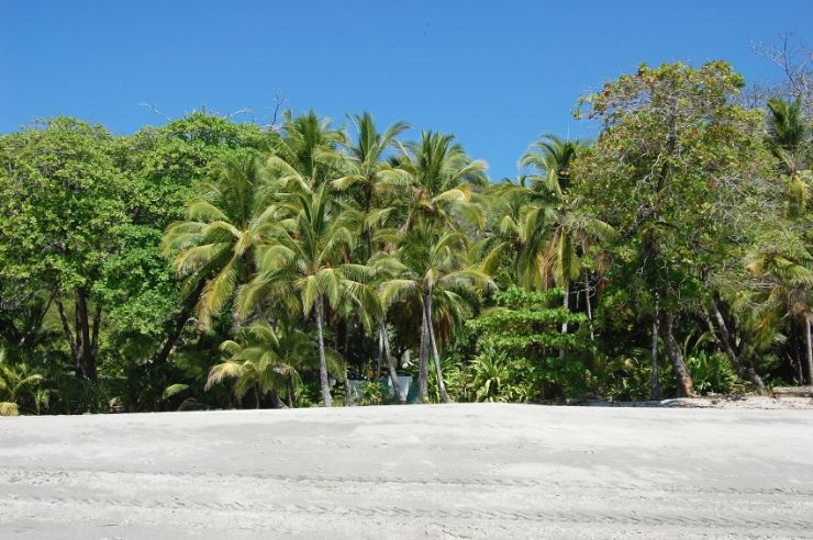 Palms on Montezuma Beach