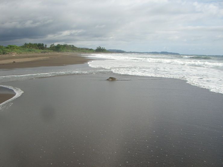 playa ostional costa rica map See The Olive Ridley Sea Turtle Lay Its Eggs At Ostional Wildlife playa ostional costa rica map