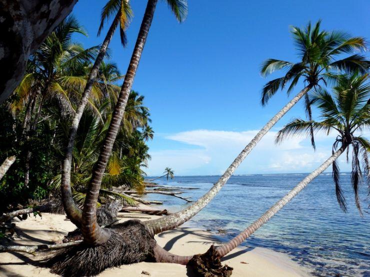 Palms over the ocean on Cahuita beach