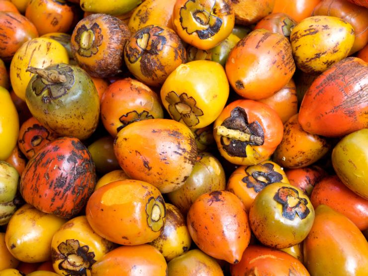 Pejibaye (Peach Palm Fruit)