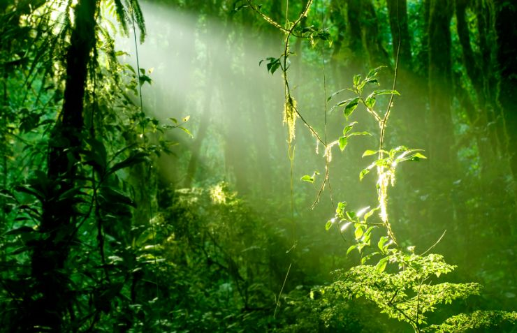 Morning light in Santa Elena Cloud Forest Reserve