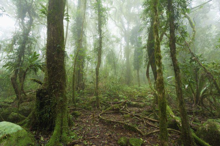 Santa Elena Nat. Park cloud forest sanctuary