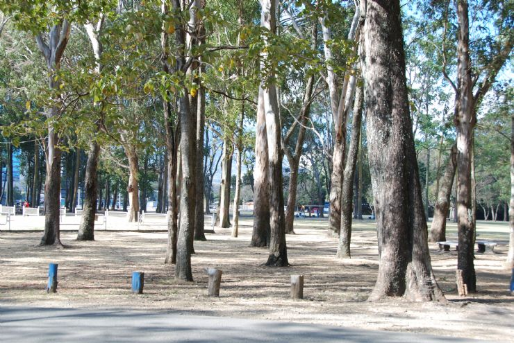 Big trees in La Sabana Park