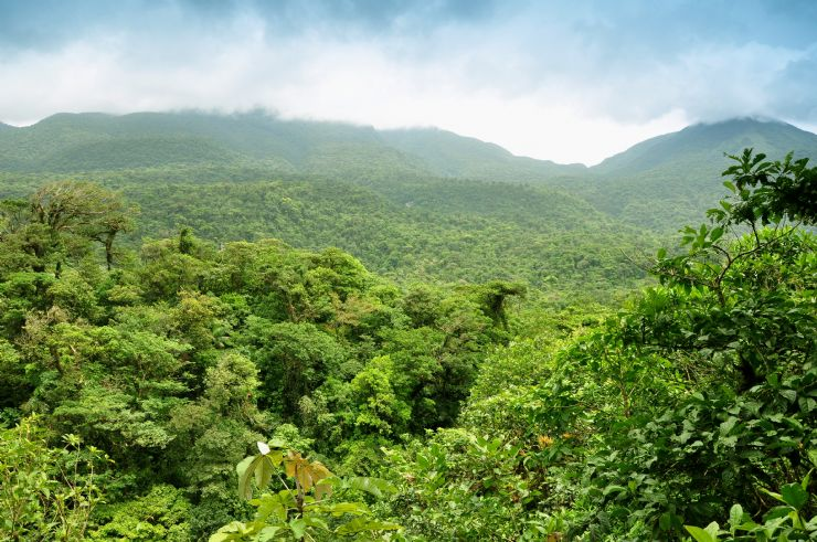 View of forest from Hojancha Guanacaste