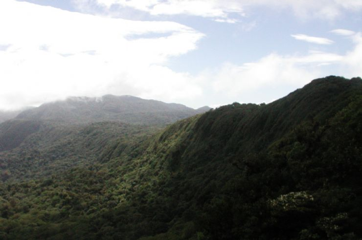 Looking over the canopy of Monteverde Cloudforest