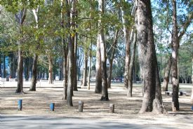 Big trees in La Sabana Park, home of El Yigüirro
