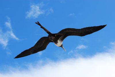 Birds of Costa Rica - Photo Gallery - Go Visit Costa Rica