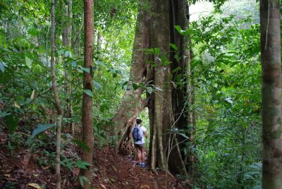 The Differences Between Cloud Forests and Rainforests