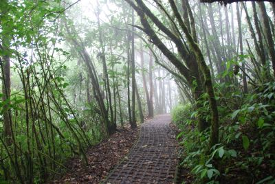 Beautiful Hiking Trails In Selvatura Park In The Heart Of Monteverde