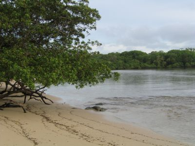 Explore the sun and surf of Playa Langosta on the Pacific coast of  Guanacaste - Go Visit Costa Rica