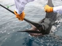Catch a live one on a sportfishing vacation in Costa Rica