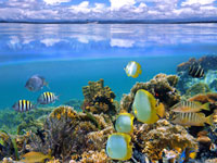 See the reef of Cahuita National Park