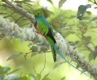 Los Quetzales National Park