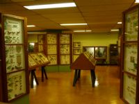 Visit the Museum of Insects