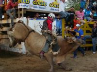 Venture into the world of Costa Rican bullfighting