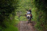 Horseback riding is a great way to tour Costa Rica