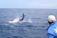Experience sportfishing at Los Sueños resort