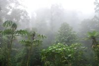Embrace the rainy season in Costa Rica