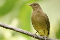 Top 5 Spots in Costa Rica for Bird Watchers