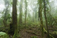 Hike through Santa Elena Cloud Forest Reserve