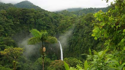 Costa Rica Cloud Forest & Arenal Volcano Tour