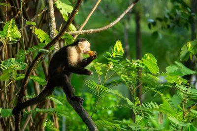 Laguna Lodge Tortuguero - Go Visit Costa Rica